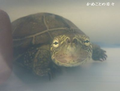 P1060590-suke.jpg
