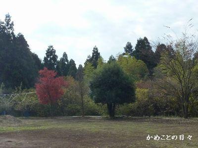 P1060722-6.jpg