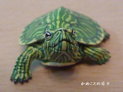 P1070145-midori.jpg