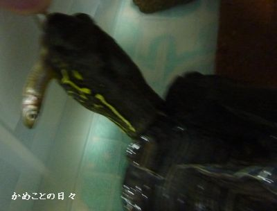 P1070711-co.jpg