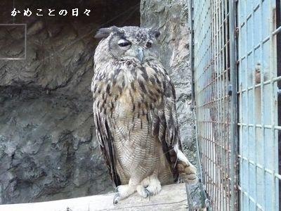 P1320249-hukuro4.jpg