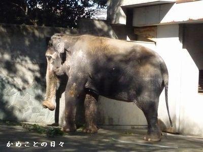 P1320260-hanako5.jpg