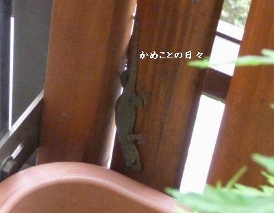 P1500372-yamori.jpg