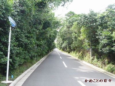 P1500718-road-2.jpg