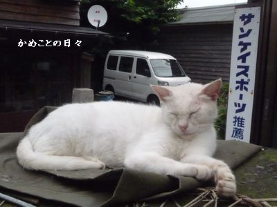 P1510018-cat.jpg