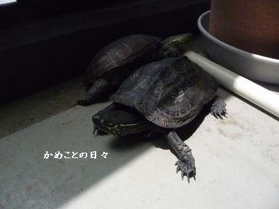 P1510358-sukeco.jpg
