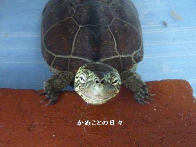 P1510477-suke.jpg