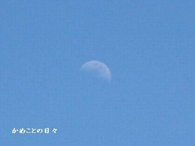 P1510640-6.jpg