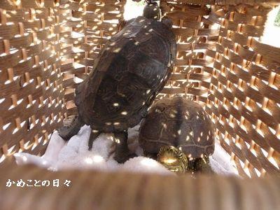 P1550264-sukeco.jpg