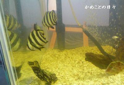 P1560870-fish.jpg