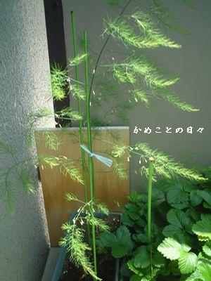 b807d798.jpg