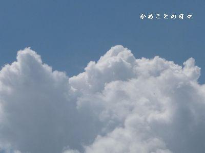 c9de3aec1.jpg