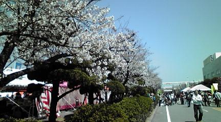 2012483桜祭り
