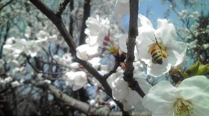 桜2012492