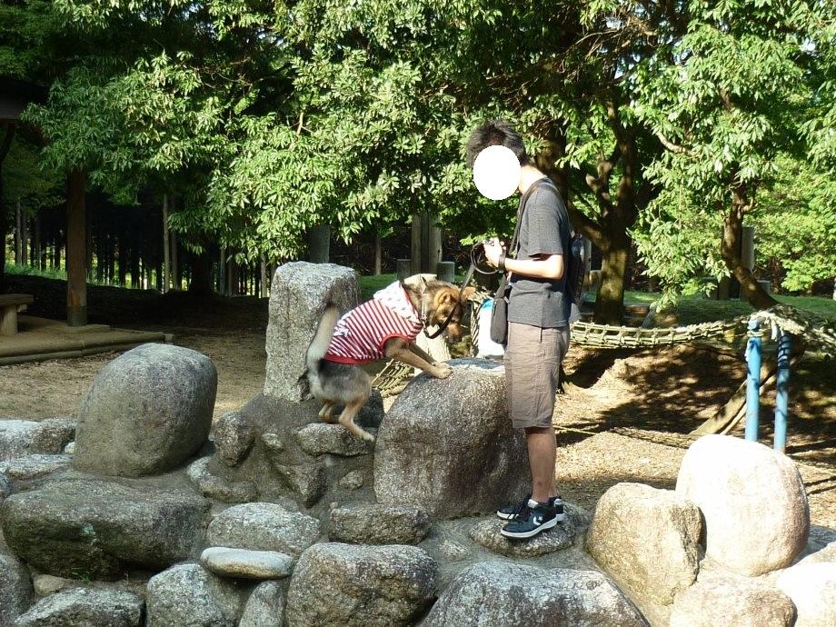201409菰野県民の森5-06