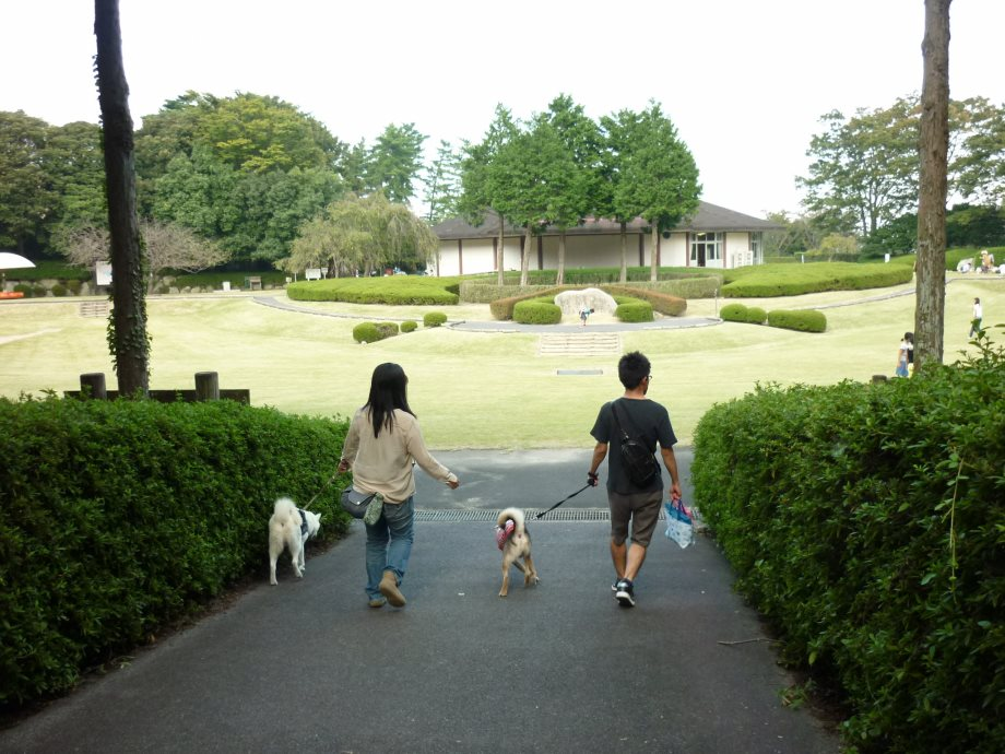 201409菰野県民の森5-08