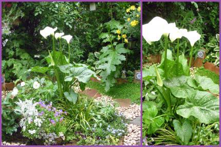 2011-05-175_convert_20110517220212.jpg