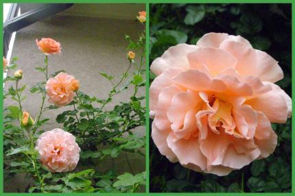2011-05-2212_convert_20110522214354.jpg
