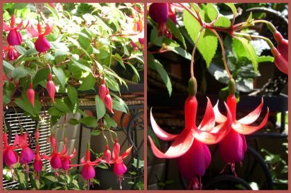 2011-06-025_convert_20110606145735.jpg