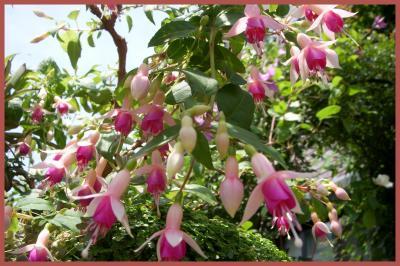 2011-06-026_convert_20110606145915.jpg