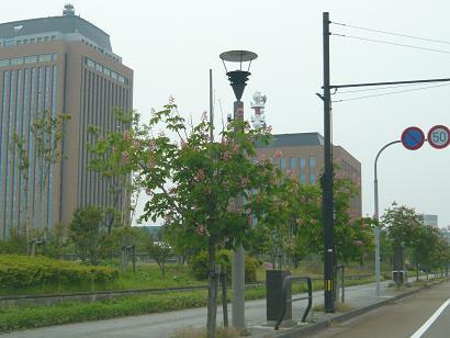 5月17日松村中央病院線