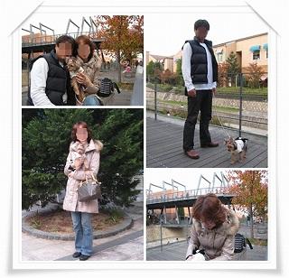 cats_20101114192214.jpg