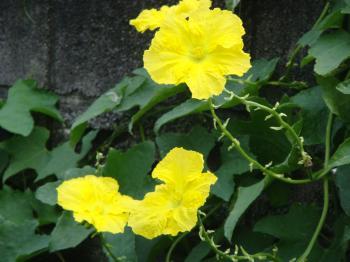 お花たち 002