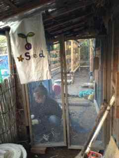 11:11・鳥小屋前のドア1