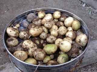1:12・ジャガイモの収穫