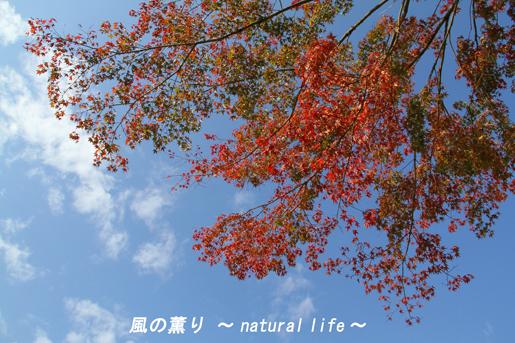 雨上がりの秋の空・ブログup
