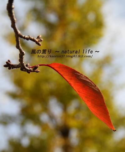 桜紅葉・ブログup