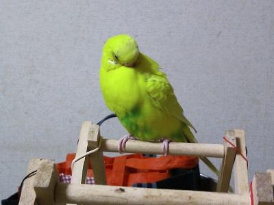 羽根繕い2