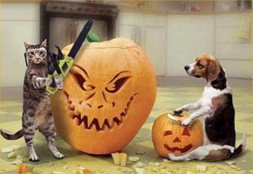 pumpkin-carving-1.jpg