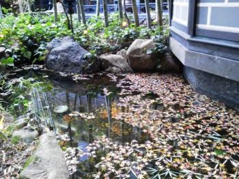 落ち葉中庭横