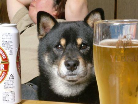 ビールとクロ450