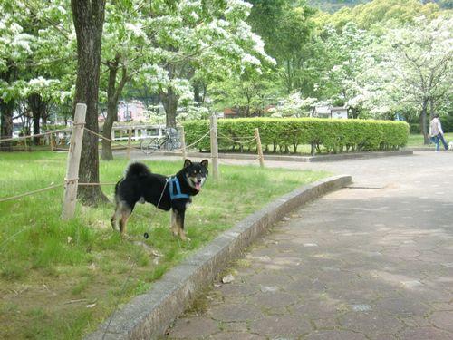 公園を散歩するクロスケ