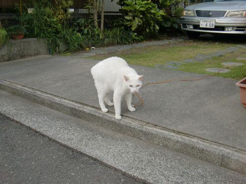 ご近所の猫