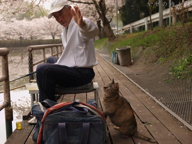 春猫桜 蔵出し1
