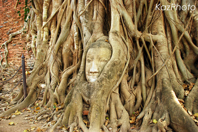 ワット・プラ・マハタート~菩提樹と仏頭