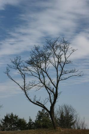 DSC06022雲と枯枝