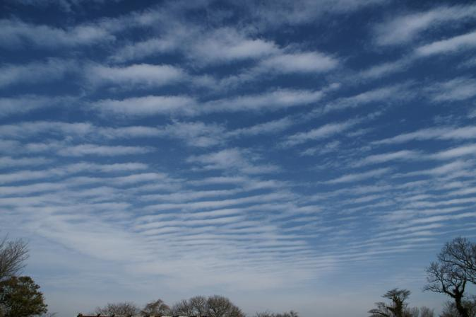 DSC06002雲と枯枝