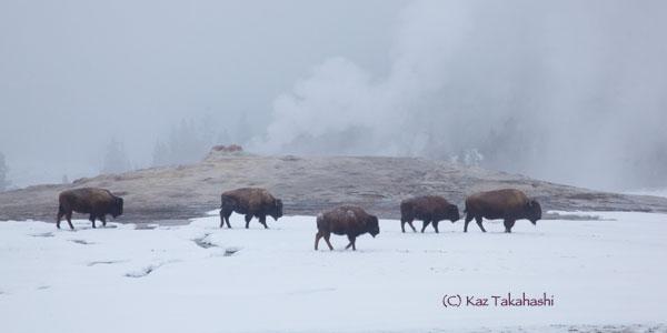 Yellowstone-冬-10