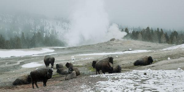 Yellowstone-冬-3