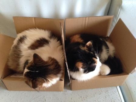 このサイズの箱、あと5個欲しい…