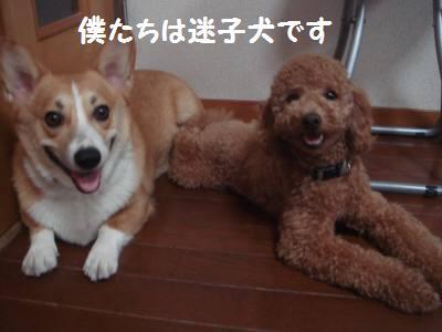 迷子ちゃん 001