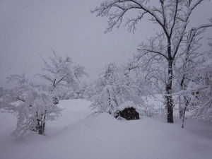 館内から見た冬景色
