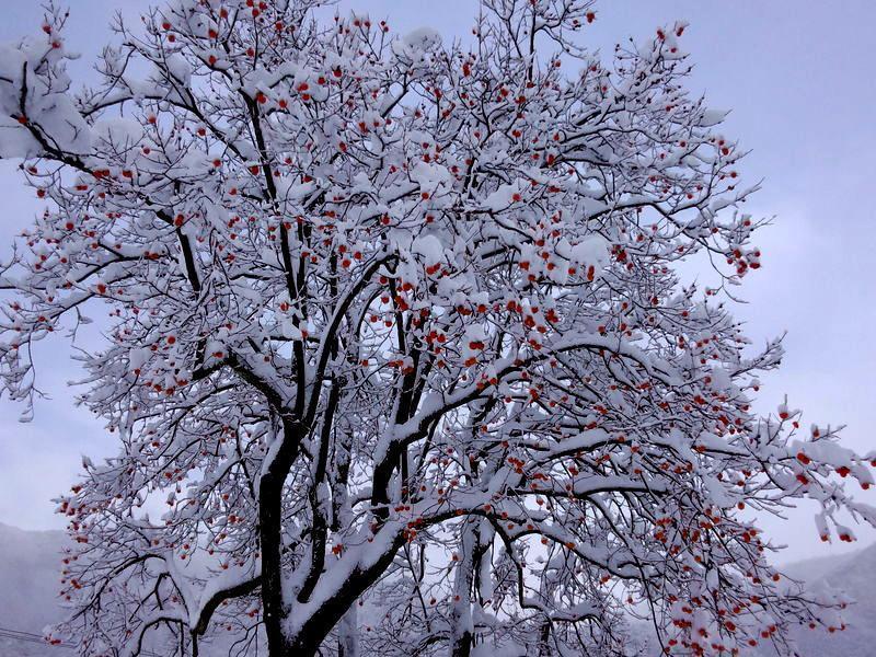 寒い冬こそ、雪国の温泉へ!雪見をしながらの露天風呂はまさしく日本の冬、最高の 贅沢  ④
