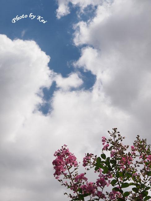 雲&サルスベリ♪