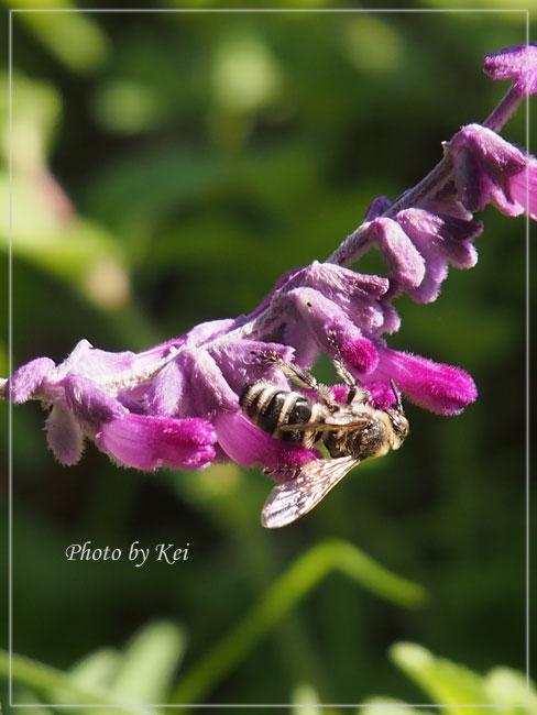 花粉だらけ♪
