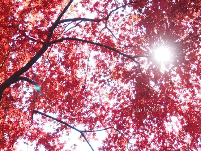 紅葉の中の光♪